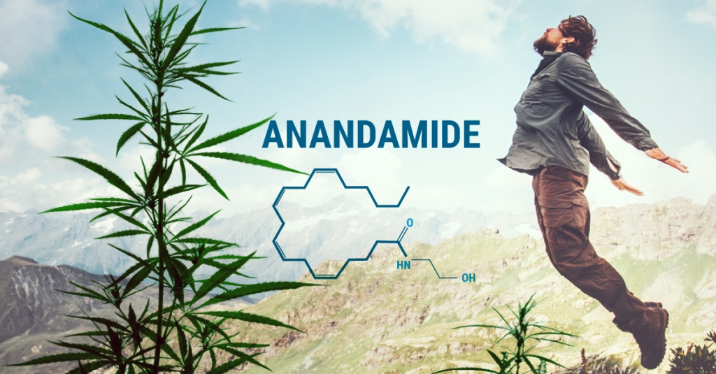 Anandamide To Aid Joy In Your Everyday Life